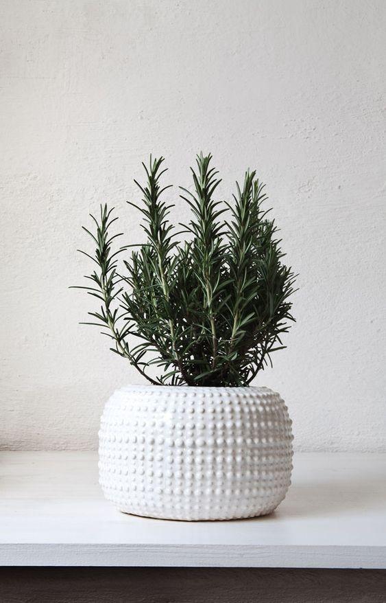 plantas3
